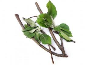 Веточный корм (ветки яблони)