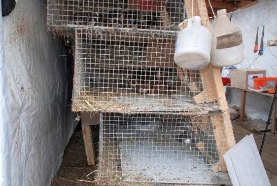 Клетки для кроликов своими руками по золотухину