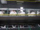 Промышленное кролиководство