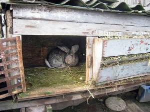 Ретро метод - ретро-кролиководство
