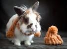 бронхит кроликов