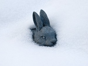обморожение кроликов