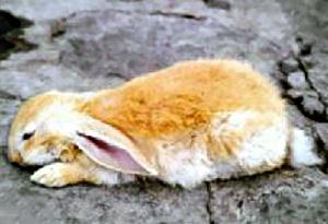 солнечный и тепловой удар кроликов