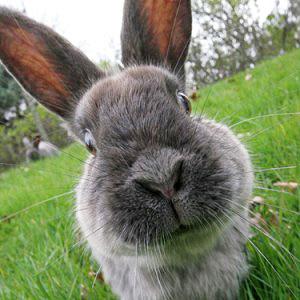 тимпания и метеоризм кроликов