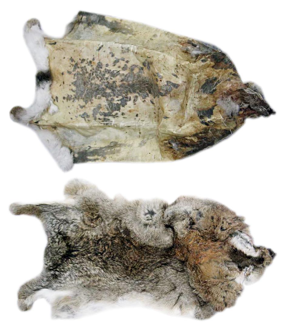 2 сорт шкурки кролика