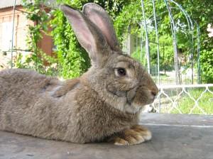 Выставка кроликов в Харькове