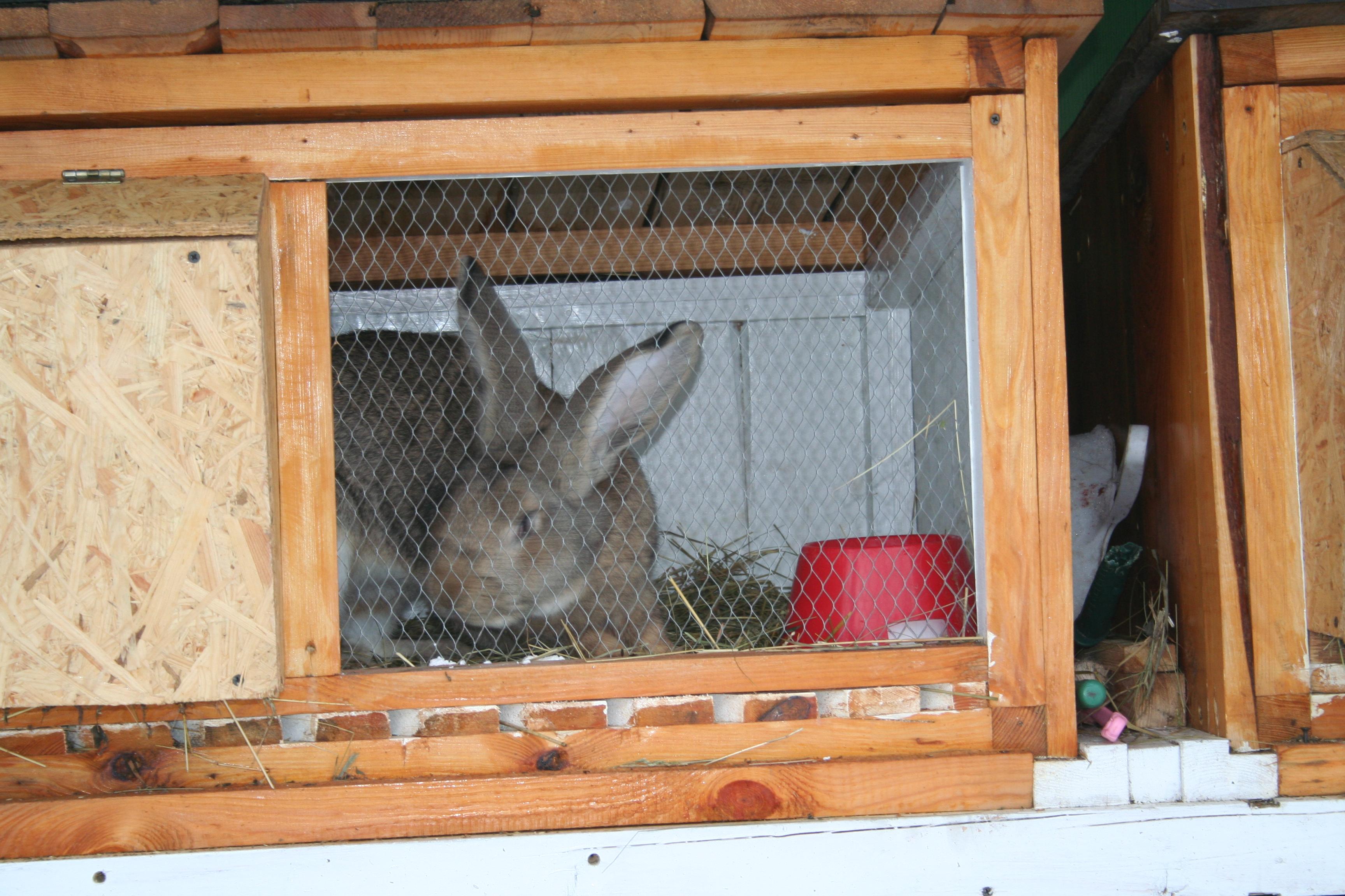 Жильё для кроликов своими руками 76