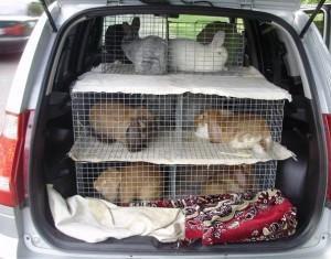 Перевозка кроликов