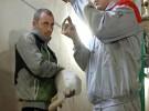 Внутримышечная инъекция кролику